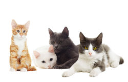 Beautiful cats Royalty Free Stock Photos
