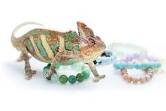Beautiful chameleon with natural stone bracelets Royalty Free Stock Image