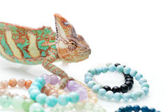 Beautiful chameleon with natural stone bracelets Royalty Free Stock Photos