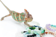 Beautiful chameleon with natural stone bracelets Stock Images