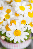 Beautiful chamomile daisy flower bouquet Royalty Free Stock Photo