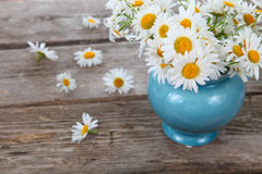 Beautiful chamomiles Stock Photo