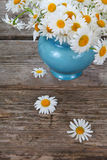 Beautiful chamomiles in a blue jug Stock Images