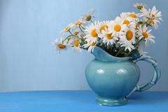 Beautiful chamomiles Royalty Free Stock Image