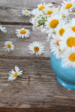 Beautiful chamomiles in a blue jug Royalty Free Stock Images