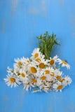 Beautiful chamomiles Stock Photography