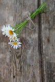 Beautiful chamomiles Royalty Free Stock Photos