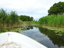 Chanel, boat and beautiful plants in summer . Lithuania stock photos