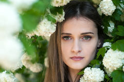 A beautiful and charming girl stands near a blossoming tree. Stock Photography