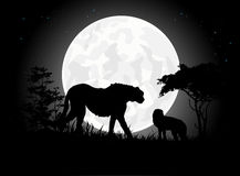 Beautiful Cheetah silhouettes with giant moon background Royalty Free Stock Images