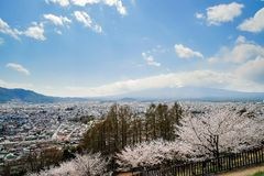 Beautiful Cherry Blossom or pink Sakura flower tree and Mount Fuji at Chureito red Pagoda temple area. Spring Season at. Fujiyoshida. landmark and popular for stock photos