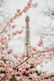 Beautiful cherry blossom tree and the Eiffel Tower. Spring in Paris. Beautiful cherry blossom tree and the Eiffel Tower Stock Images