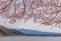 Beautiful cherry blossoms in spring with Mount Fuji Stock Photos