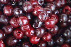 Beautiful cherry. In drops of water. fruits, vegetables, food. cherry red and burgundy. big, ripe, growing on a tree Royalty Free Stock Images