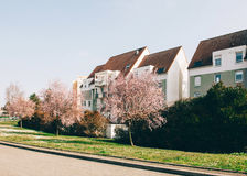 Beautiful cherry tree sakura trees in bloom with French apartmen Royalty Free Stock Photo