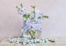 Beautiful cherry twigs  in small decorative glass  vase Royalty Free Stock Image