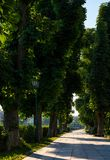 Beautiful chestnut alley in summer. Lantern among the tall trees on the Kyiv embankment of Uzhgorod town, Ukraine Stock Image