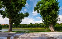 Beautiful chestnut alley in summer. Tall trees on the Kyiv embankment of Uzhgorod town, Ukraine. open view to other bank of the river with linden alley on Royalty Free Stock Photography