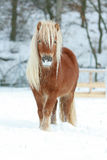 Beautiful chestnut pony with long mane in winter Stock Photo