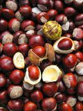 Beautiful chestnuts on ground in autumn, Lithuania Stock Images