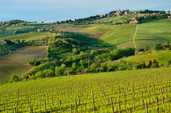 Beautiful Chianti landscape, Tuscany Stock Images