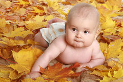 Beautiful child in autumn leaves. Beautiful children in autumn leaves royalty free stock photo