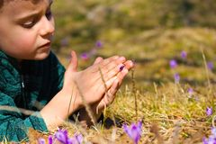 Beautiful child between crocus flowers Stock Photography