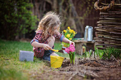 Beautiful child girl in spring garden plays and planting hyacinth flowers Royalty Free Stock Photos