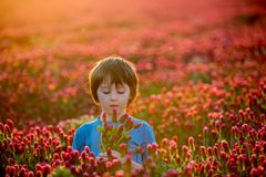 Beautiful child in gorgeous crimson clover field on sunset, hold Stock Photo