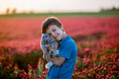 Beautiful child with cute bunny in gorgeous crimson clover field Stock Images