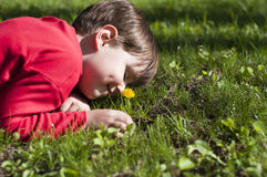 Beautiful child picks flowers on a summer green meadow. Beautiful child picks flowers on a green meadow Stock Image