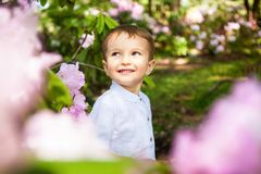 Beautiful child in pink flowers, little boy smile in summer stock photography