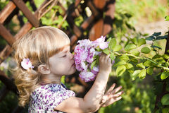 Beautiful child smelling rose stock photography