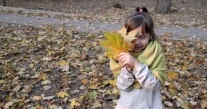 Beautiful child in warm scarf plays with maple yellow leaf on background of autumn foliage stock video