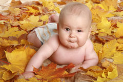 Beautiful children in autumn leaves Stock Photo
