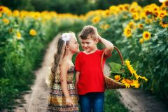 Beautiful friendly children in the field with sunflowers royalty free stock photography