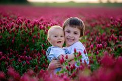 Beautiful children in gorgeous crimson clover field on sunset Royalty Free Stock Photography