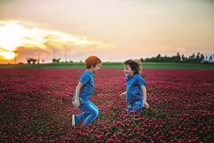 Beautiful children in gorgeous crimson clover field on sunset Royalty Free Stock Photos