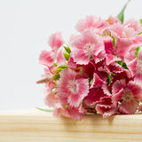 Beautiful chinese carnations (Dianthus chinensis) with details on a wooden surface Royalty Free Stock Image