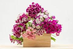 Beautiful chinese carnations (Dianthus chinensis) with details on a wooden surface Royalty Free Stock Photography