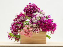Beautiful chinese carnations (Dianthus chinensis) with details on a wooden surface Royalty Free Stock Photo