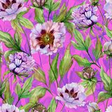 Beautiful Chinese peony with green leaves on bright pink background. Seamless floral pattern. Watercolor painting. Hand drawn. Beautiful Chinese peony with royalty free illustration