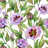 Beautiful Chinese peony with green leaves on white background. Seamless floral pattern. Watercolor painting. Hand drawn and painted illustration. Fabric royalty free illustration