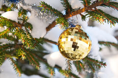 Beautiful christmas ball on Christmas tree Stock Image