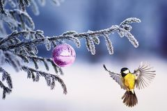 Beautiful Christmas card bird tit flies to a branch of a festive royalty free stock photography