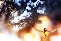 Beautiful Christmas card bird tit flies to a branch of a festive stock image