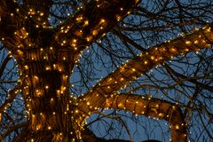 Beautiful Christmas Lights Around A Tree Branches Against The Light Blue Sky Background In Night Stock Photo