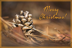 Beautiful Christmas pine cone Stock Image