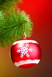 Beautiful Christmas red ball on fir tree Stock Photos