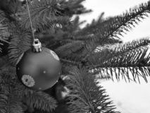 Christmas tree toy on a branch in the winter on a background of snow royalty free stock photo